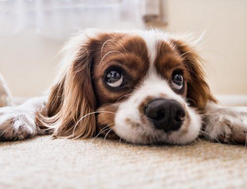 Kutya gazdik kérdezték: bárhol be lehetne tiltani a tűzijátékot?