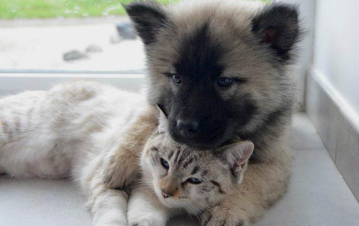 Házi kedvencek karanténban: mi történik a háziállatokkal a veszélyhelyzetben?