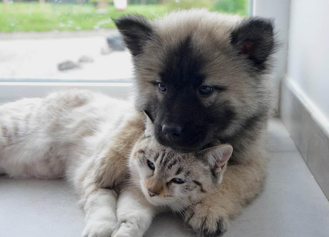 Házi kedvencek karanténban: mi történik a háziállatokkal a veszélyhelyzetben? - Érthető Jog